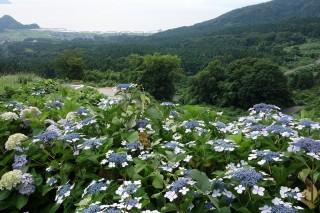 20130628(16)五位組念仏奉仕団!16